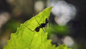 How Much Does Ant Exterminator Cost in 2021: Ant Control Prices Explained