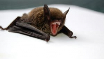 Comprehensive Bat Poop Review: How to Identify and Remove It