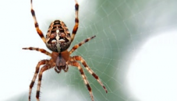 How Much Does Spider Exterminator Cost in 2021: Spider Control Prices Explained