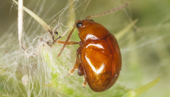 Bugs That Look Like Fleas: How to Identify Them