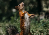 Squirrel Poop: How to Identify & Remove It Safely