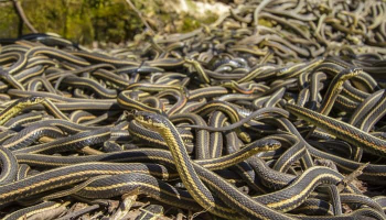 How to Get Rid of Garter Snakes — Best Tactics & Products