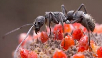 How to Get Rid of Ants Inside & Outside – Most Effective Methods