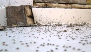 How to Get Rid of Ants in the Bathroom – Effective Approaches