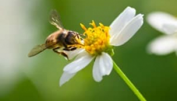 How to Get Rid of Bees without Compromising Safety