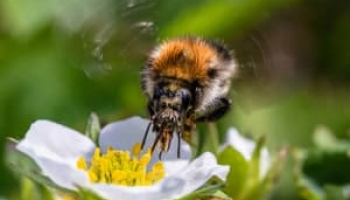 How to Get Rid of Bumble Bees: Safe Bumble Bee Control Methods