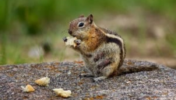 How to Get Rid of Chipmunks: Helpful Solutions and Top-6 Products