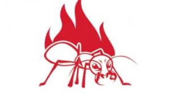 How to Get Rid of Fire Ants: Effective Fire Ant Removal Methods