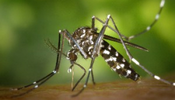 4 Bugs That Look Like Mosquitoes: Identify the Species