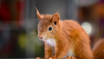 How to Get Rid of Squirrels: Detailed Identification & Removal Guide