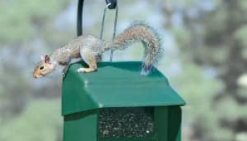Best Squirrel Proof Bird Feeder in 2021: Expert Reviews