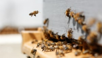 How Much Does Bee Removal Cost in 2021: Bee Exterminator Prices Explained