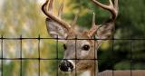 5 Best Deer Fences to Buy in 2021: Expert Deer Fencing Reviews
