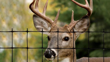 5 Best Deer Fences to Buy in 2021: Expert Deer Fencing Reviews