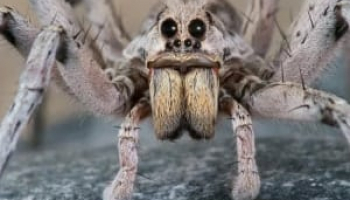 How to Get Rid of Wolf Spiders: Know More, Struggle Less