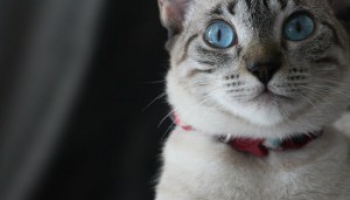 Comprehensive Advantage II for Cats Review: Is It Effective Enough?