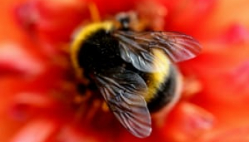 Best Bee Killer Sprays in 2021: Expert Reviews