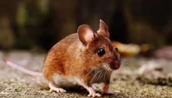 Best Mouse Poisons in 2021: Expert Reviews