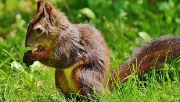 Best Squirrel Poison in 2021: Expert Reviews