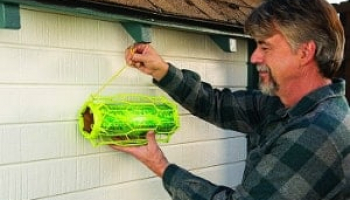 Best Carpenter Bee Traps in 2021: Expert Reviews