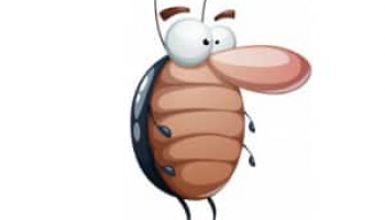 6 Most Effective Ways to Get Rid of Cockroaches & Best Roach Killers Reviewed