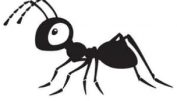 How to Get Rid of Carpenter Ants: Tips from an Expert