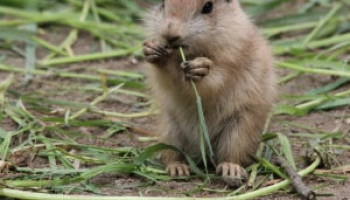 Best Gopher Repellents in 2021: Expert Reviews