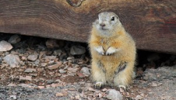 How to Get Rid of Gophers: Effective Gopher Removal Methods