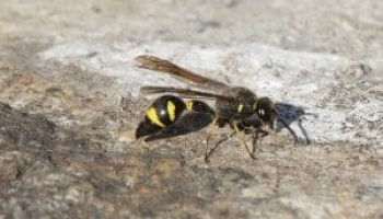How to Get Rid of Ground Wasps on Your Backyard
