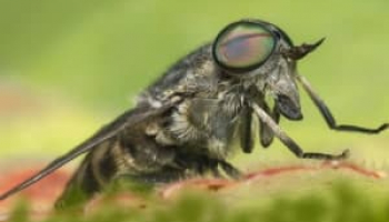 How to Get Rid of Horse Flies: Detailed Identification & Removal Guide