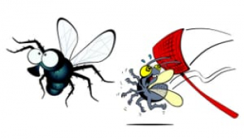 How to Get Rid of House Flies: 7 Most Effective Fly Removal Methods