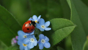 How to Get Rid of Lady Bugs: Detailed Identification & Removal Guide