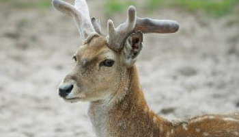 How to Keep Deer Out of Garden Before It's Too Late