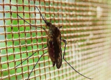 How to Kill a Mosquito in Your Room: Methods That Work