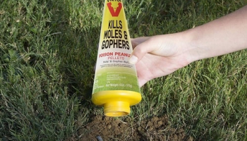Best Gopher Poison in 2021: Expert Reviews