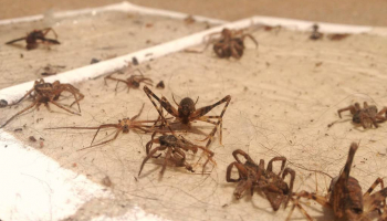 Best Spider Traps in 2021: Expert Reviews