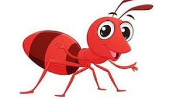 How to Get Rid of Sugar Ants: Detailed Extermination Guide