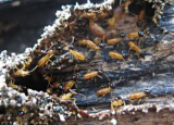 Termite Droppings: How to Identify and Remove Them
