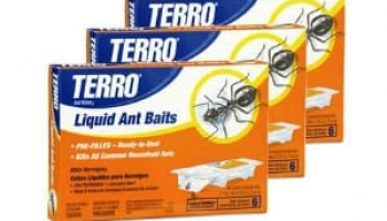 Comprehensive Terro Ant Baits Review: Is It Effective Enough?