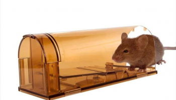 Best Vole Traps to Buy: How to Destroy Pests Quickly