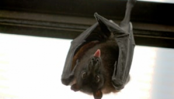 How to Get Rid of Bats: Everything You Need to Know to Protect Your House
