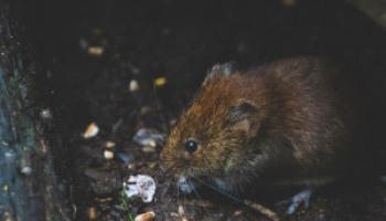 Best Vole Repellent in 2021: Expert Reviews