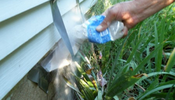 Best Wasp Powders in 2021: Expert Reviews