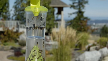 Best Yellow Jacket Trap: Find the Most Suitable Solution for Your Garden