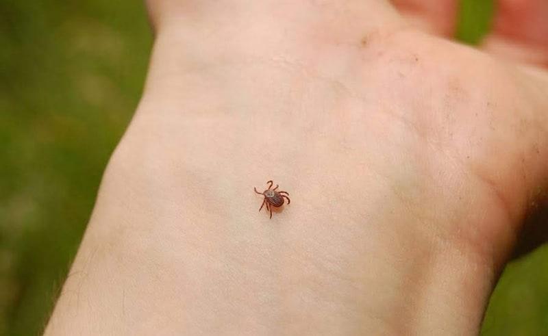 tick on a hand