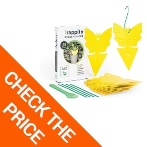 Trappify Sticky: Maybe Best Indoor Fly Traps by a New Vendor
