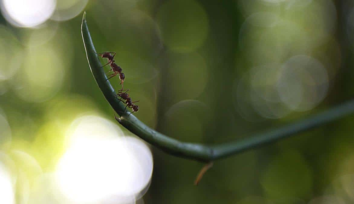 Ants on the branch