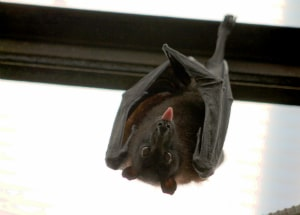 upside down bat