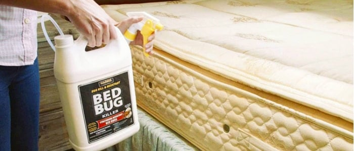 using bed bug