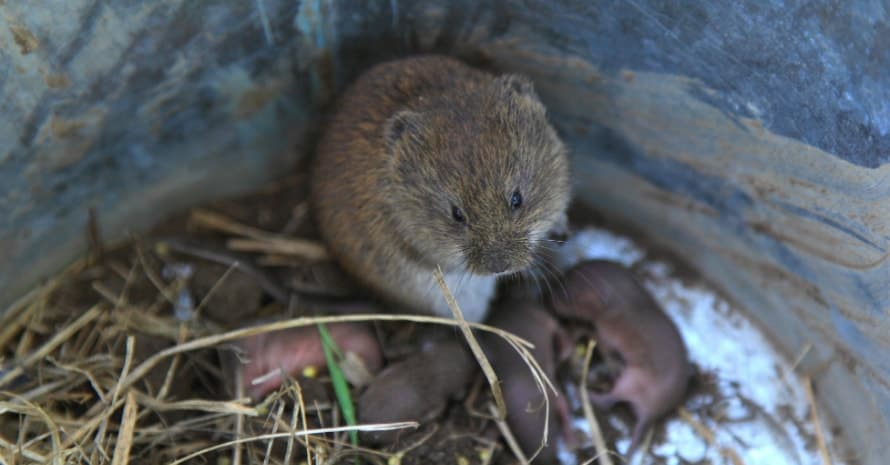 vole with children